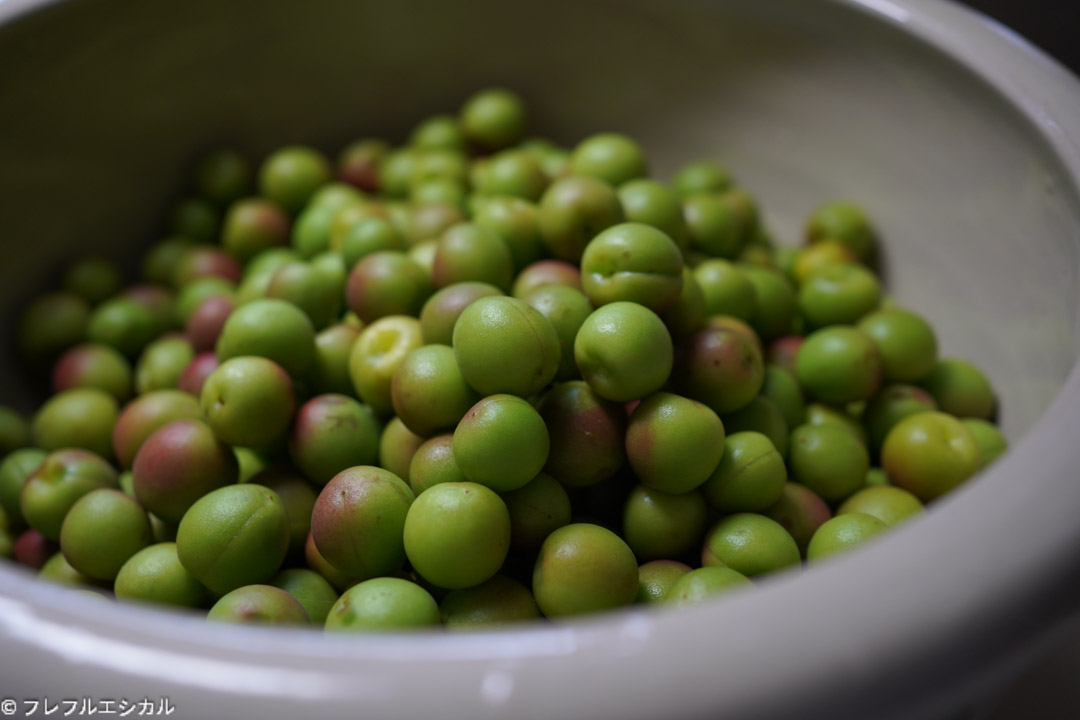 Estimated harvest time for Koume